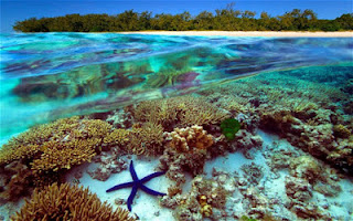 Pulau Great Barrier Reef