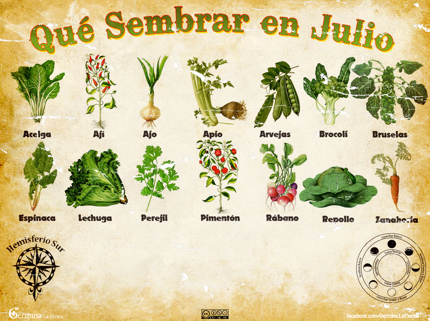 Germina la florida calendario de siembra de julio - Que plantar en el huerto ...