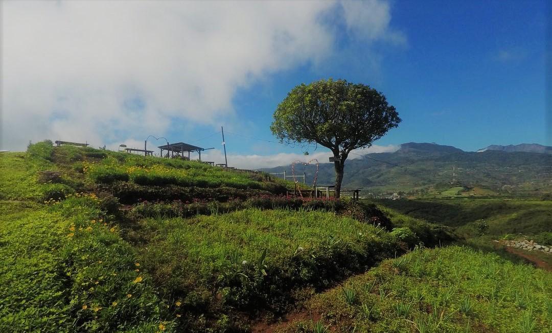 Menikmati Sejuknya Udara Pegunungan Di Perkebunan Teh Malino Arsy