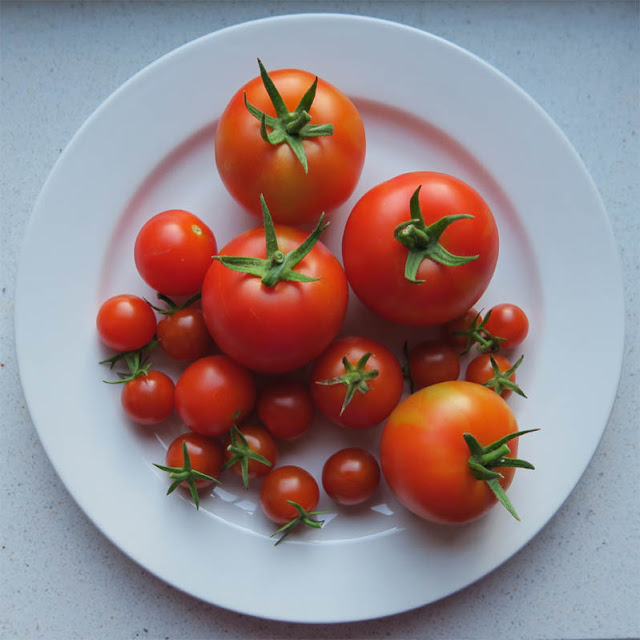 Tomaten aus dem Garten 2018 | pastasciutta.de