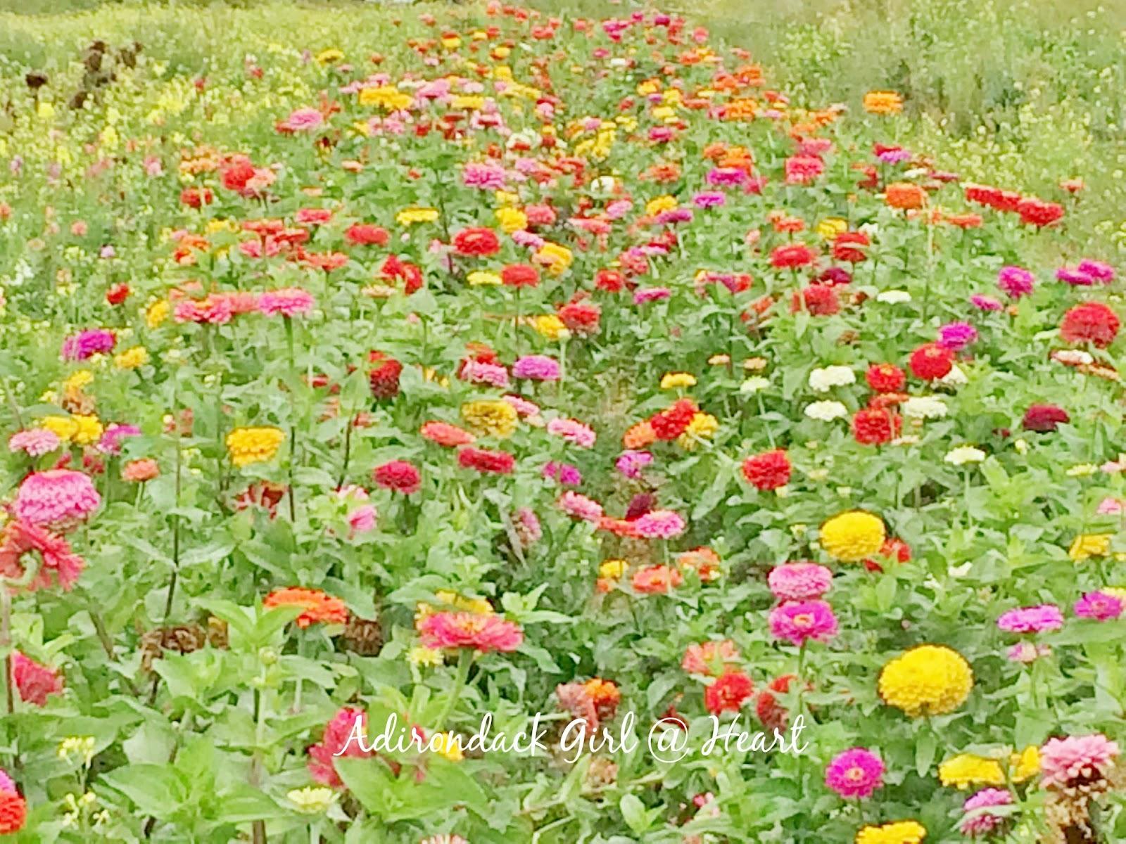 A Flower Farm in February