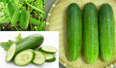 Here's Why You Should Eat Cucumber As Often As You Can