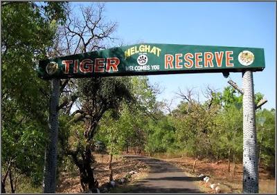 melaghat-tiger-reserve-amrawati