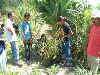 How to take cuttings from bamboo