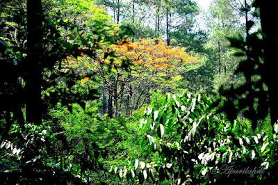 Keanekaragaman Flora Di Gunung Papandayan