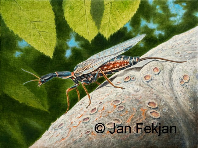 Bilde av digigrafiet  'Kamelhalsflue'. Digitalt trykk laget på bakgrunn av et maleri av et insekt. Illustrasjon av kamelhalsflue, Raphidioptera. Hovedmotivet er et insekt med lang hals, vinger og en bakpart som minner om en hale. Kamelhalsfluen sitter på en stamme/grein, og det er bladverk over fluen og i bakgrunnen. Bildet er i breddeformat.