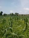 जैविक खेती