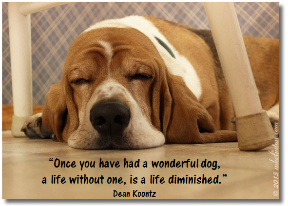 "Bentley Basset Hound meme ""Once you have a wonderful dog"""