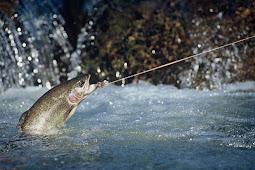 Equipment You Must Begin Fly Fishing