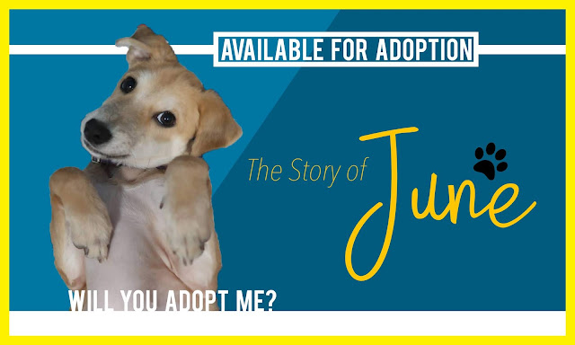 Available for Adoption: The Story of June