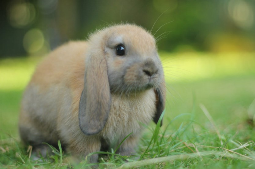 Foto dan gambar imut kelinci lucu lucu ternak kelinci hias kelinci hias kelinci merawat kelinci youtube