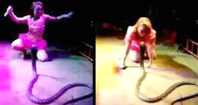 Kronologi Irma Bule dipatok Ular Cobra