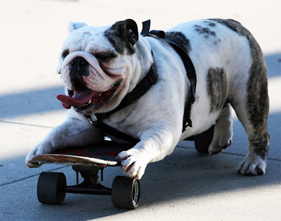 Cute Baby Bulldogs Wallpaper Funny Bulldog Only New Photographs Funny And Cute Animals