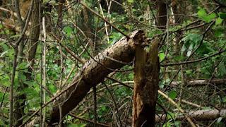 Поломаные деревья в лесу