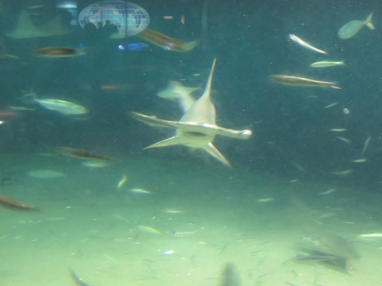 寂寞星球的旅人Traveller of lonely planet: 葛西臨海水族館