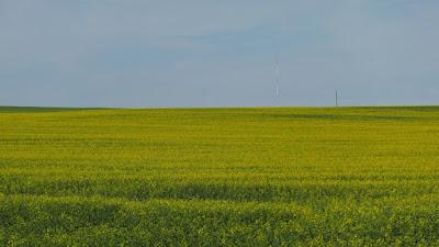 Cypress Hills, Alberta, canola, blooming, crop