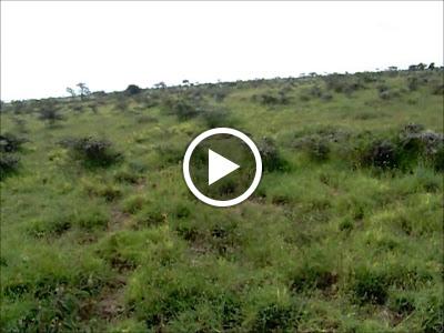 Loita Plains Wildlife