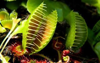 Las plantas más rápidas del mundo