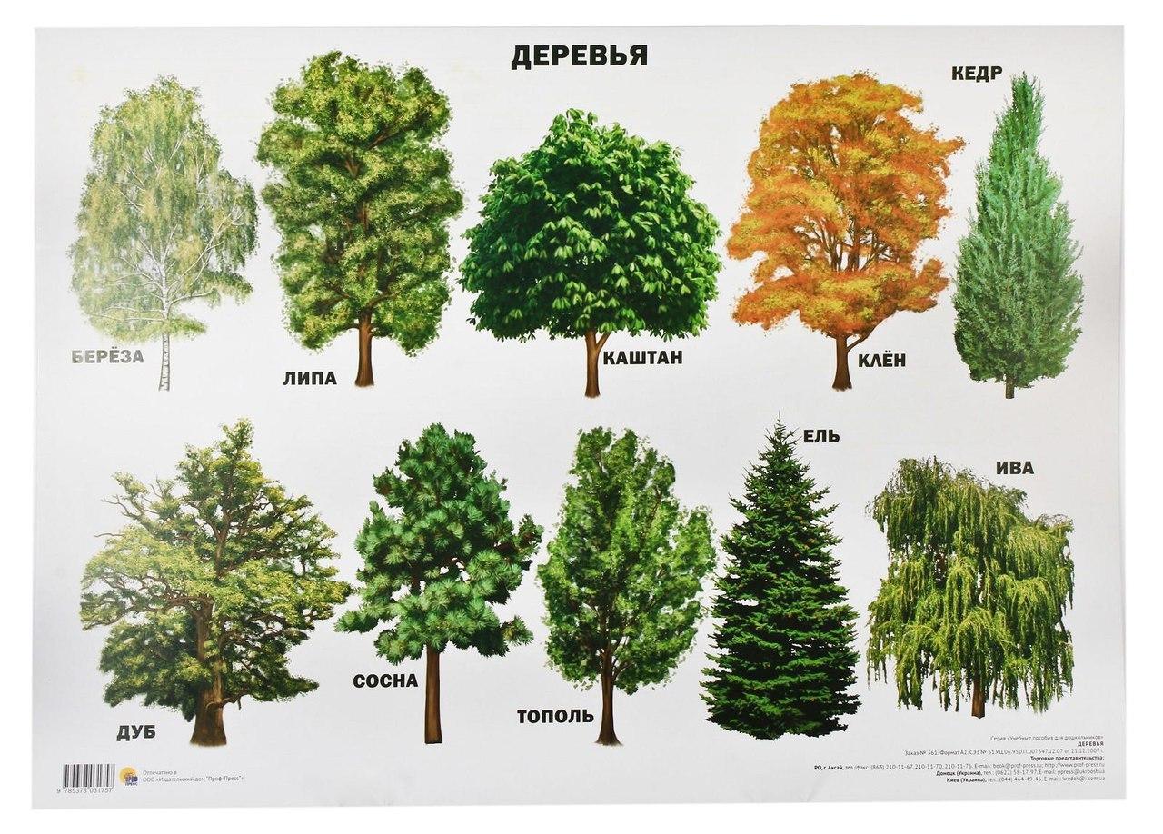 деревья в картинках их сборка всей видимости