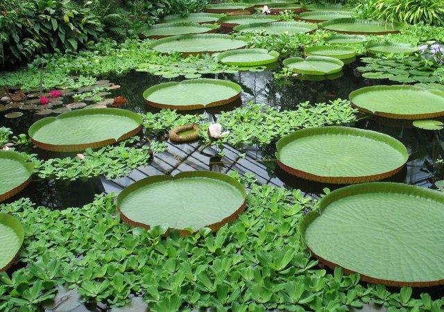 Что посмотреть в Эдинбурге бесплатно: ботанический сад