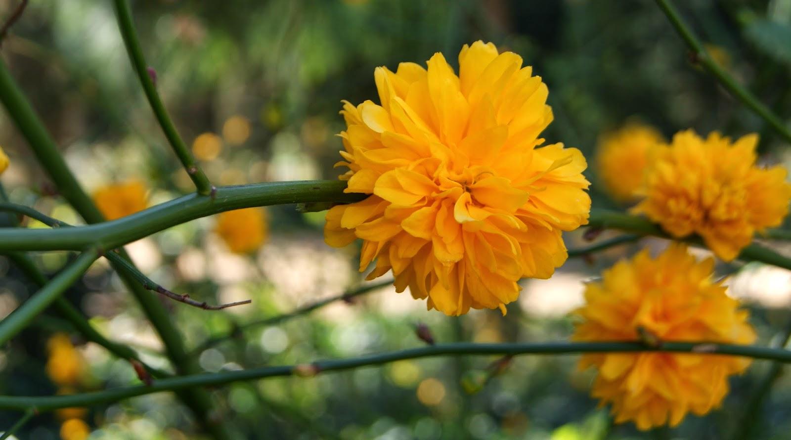 Floretes grogues al Parc de les Aigües (Barcelona) per Teresa Grau Ros