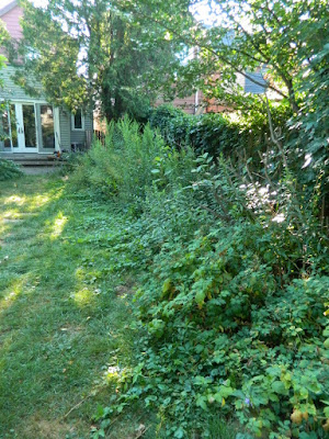Toronto Dovercourt Park Backyard Garden Cleanup Before by Paul Jung Gardening Services--a Toronto Gardening Company