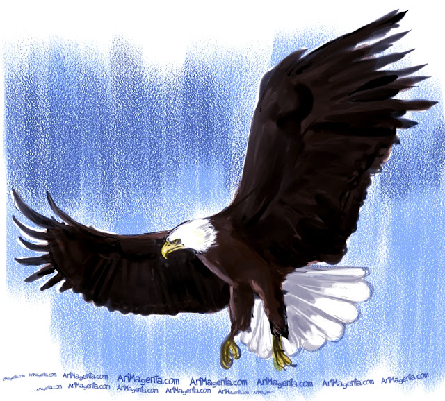 Bald Eagle sketch painting. Bird art drawing by illustrator Artmagenta