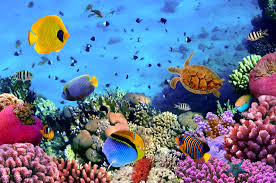tranh kính nghệ thuật đại dương