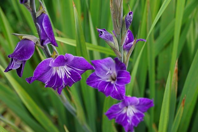 hoa dơn đẹp nhất 5