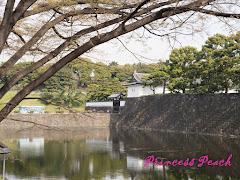 皇居外圍江戶城牆配櫻花