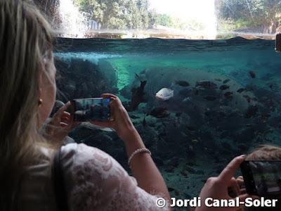 Hábitat del hipopótamo en Bioparc Valencia