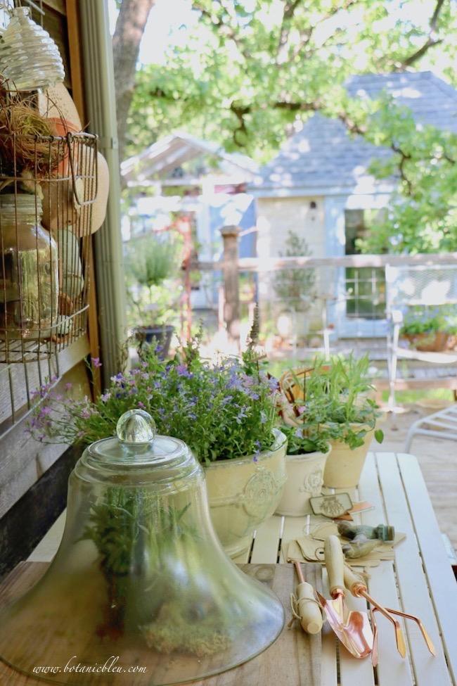 spring tour of gardener's potting bench glass cloche