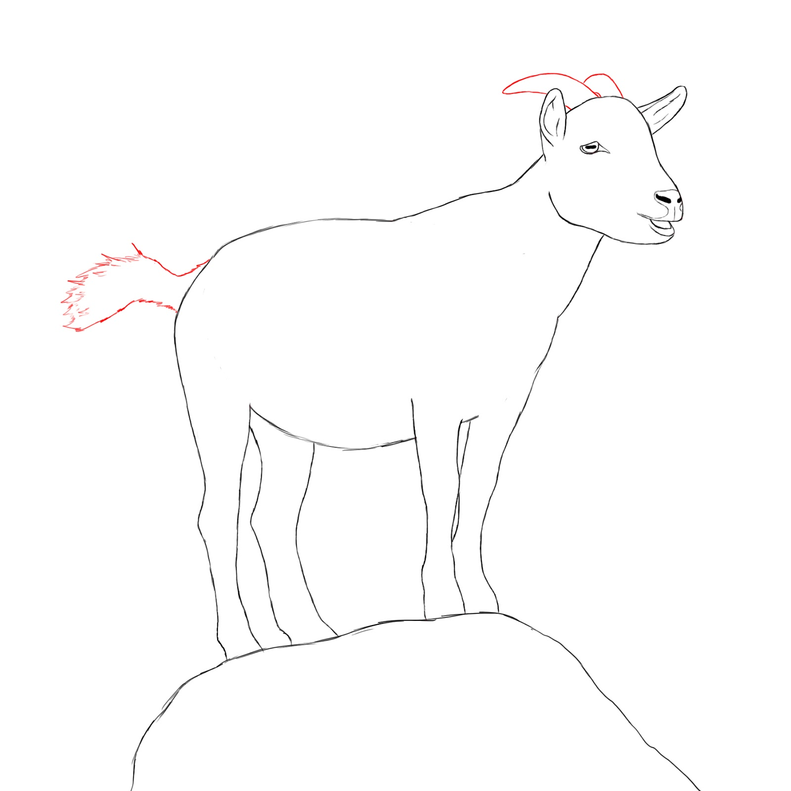 Goat drawing photo 25