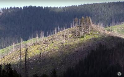 illegális fakitermelés, Rise Project Romania, Holzindustrie Schweighofer, Clear Cut Crimes