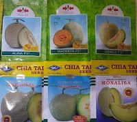 buah melon,melon,benih melon,budidaya melon,bibit melon,lmga agro,petani,anti virus