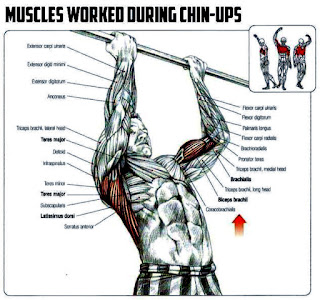 chin up muscles