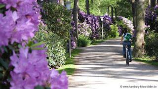 Radfahren auf dem Rhododendronpfad in Hamburg