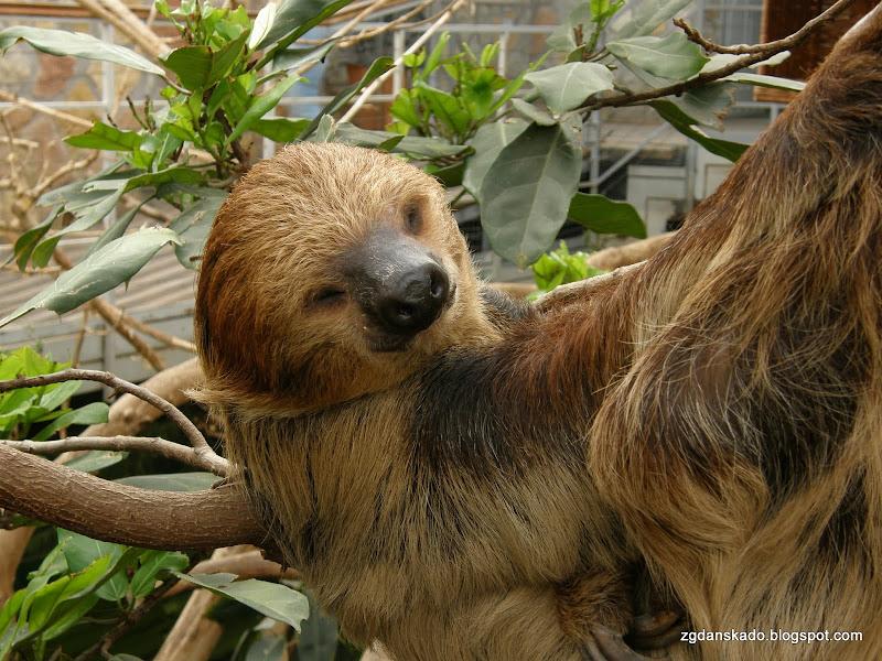 Budapeszt - zoo