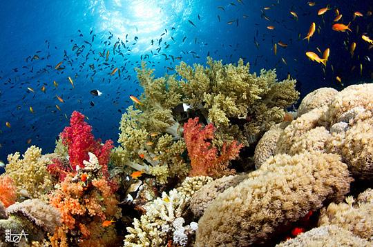 Gambar Pemandangan Bawah Laut  Gambar Pemandangan