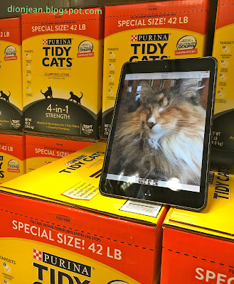 Lucy the cat at Costco