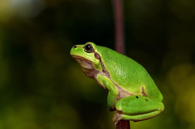 Alerta sobre situación de anfibios en Ecuador