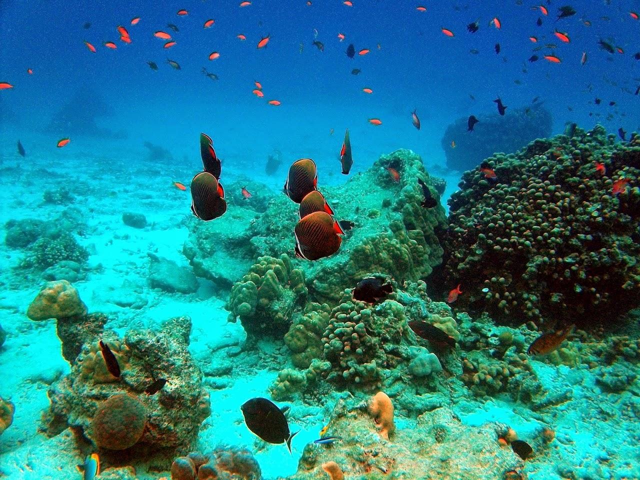 Daftar Tempat Wisata di Sabang Banda Aceh Yang Menarik