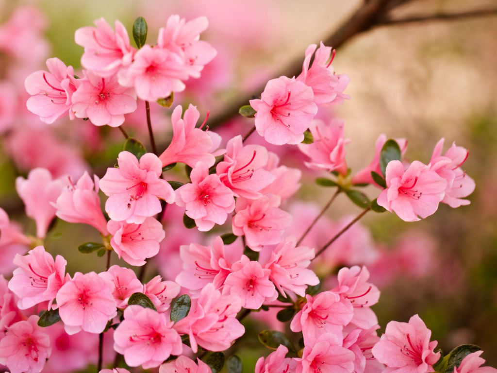 flower background hd