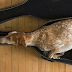 15 Hilarious Photos That Prove Dogs Can Fall Asleep Anywhere