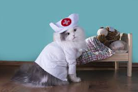 Insurance Plan for Cats Pets