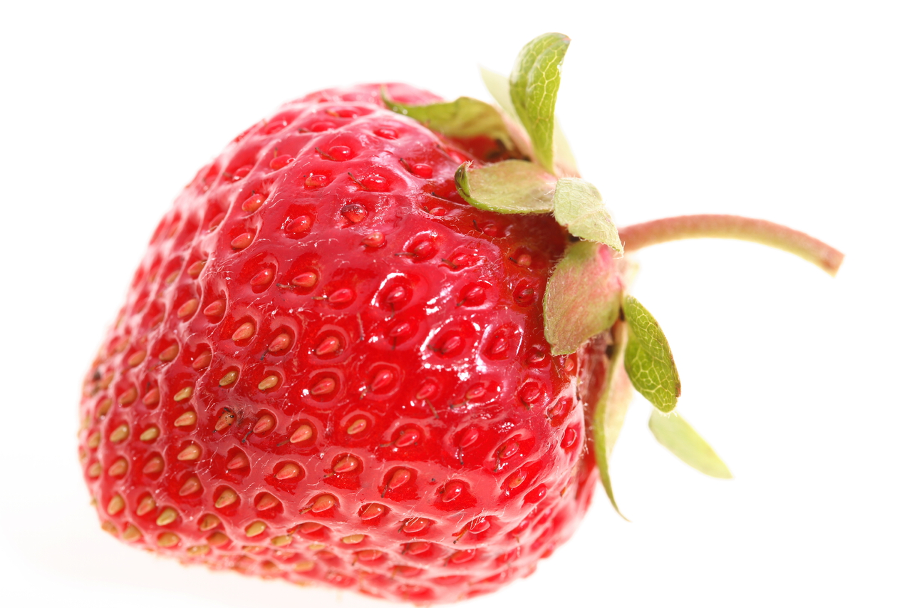 LATEST ALL FUN THINGS: Organic Strawberry Production