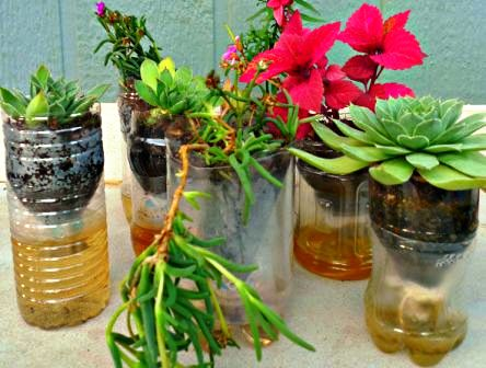 Kreatif Membuat Pot Hidroponik Dari Botol Plastik Bekas