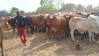 SAM 2148%2B %2BCopy - Ufugaji katika shamba la Rushu Ranchi Kisarawe