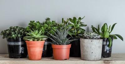 Best Choice of Low Maintenance Indoor Plants