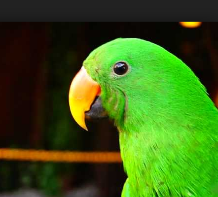 15 Koleksi Gambar Burung Kakak Tua yang Paling Unik Dan ...